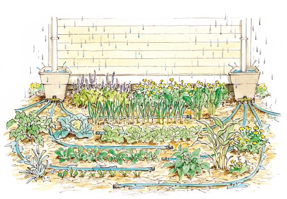 Rainwater Harvesting System Illustration